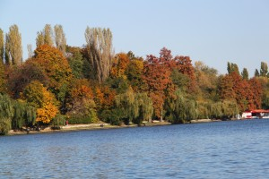 Autumn colors - Herastrau park - Bucharest, Romania - water, trees - 3