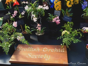 Orchid fair in Glasgow 1