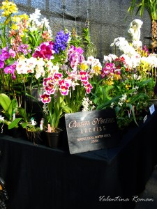 Orchid fair in Glasgow 2