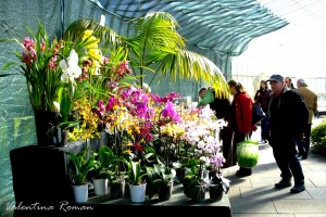 Orchid fair in Glasgow 4