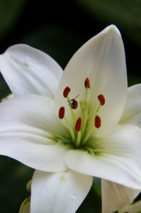 white flower detail