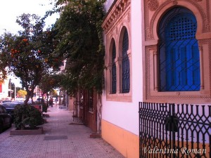 Orange trees in Nabeul, Tunisia - On the streets