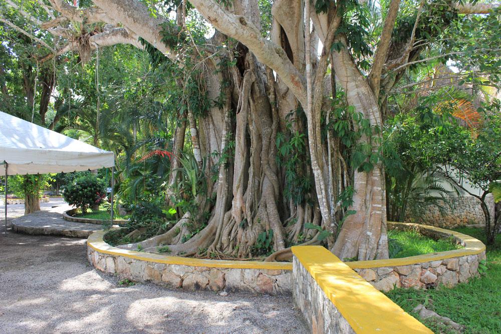 Chichen Itza Cenote 7