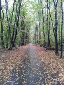 Baneasa Forest, Bucharest, autumn