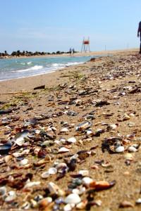 beach sea shells - Black Sea