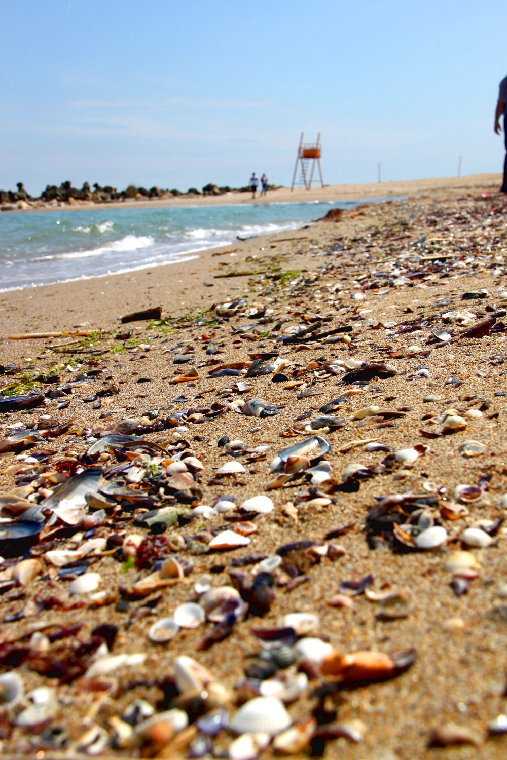 beach sea shells - Black Sea