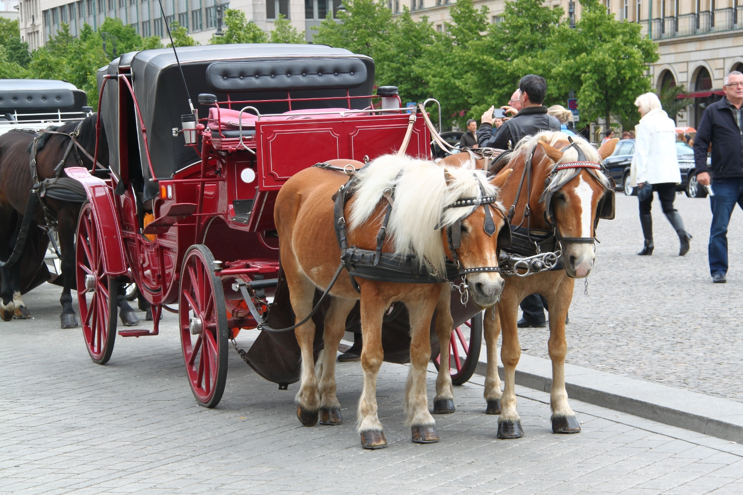 Horse carriage in Berlin