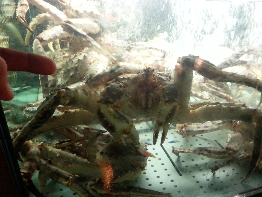 Russian crab. Left index finger for scale...