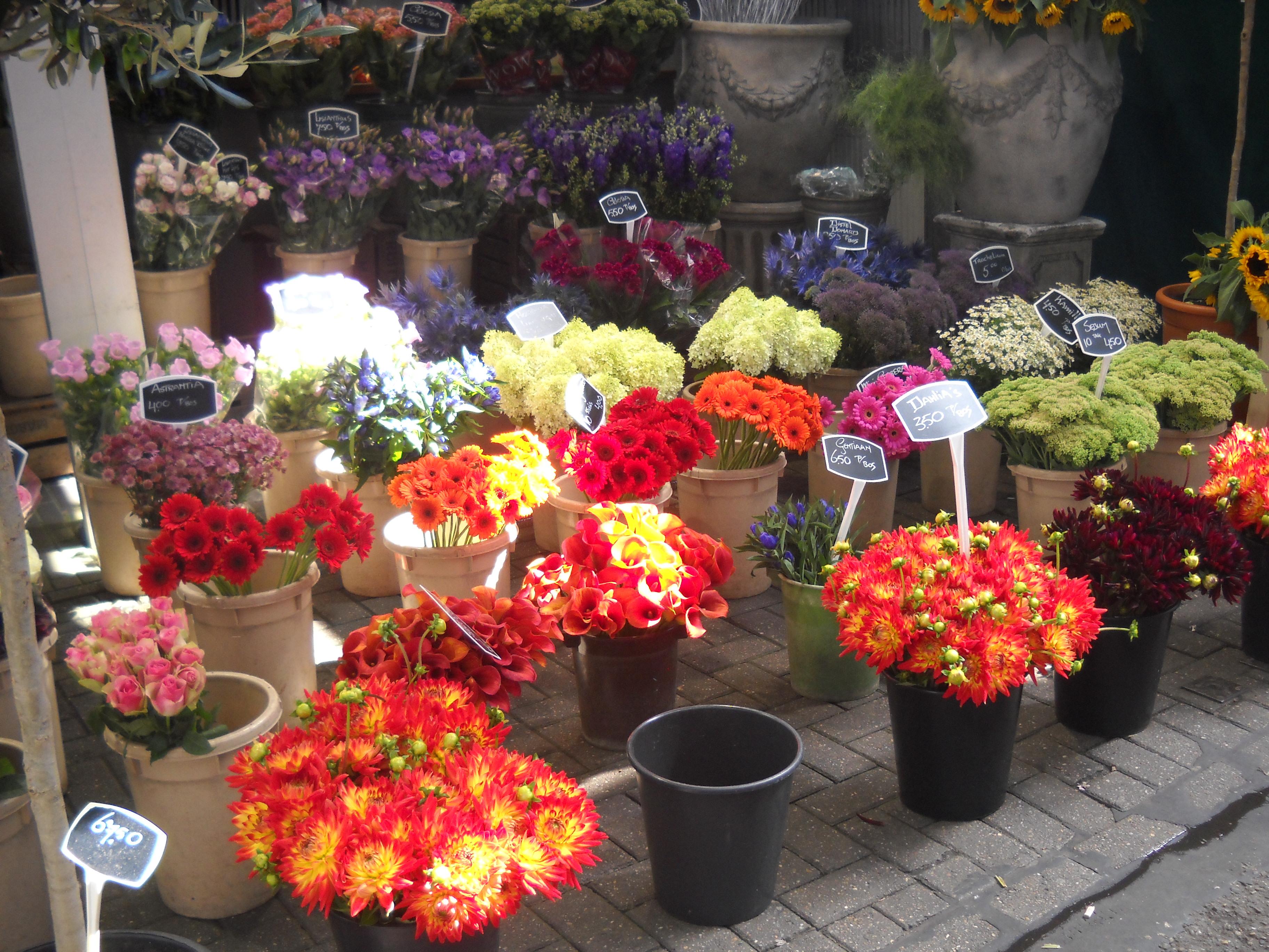 Amsterdam flowers - Flower market