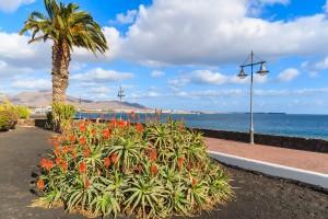 Tropical flowers in Playa Blanca, Lanzarote