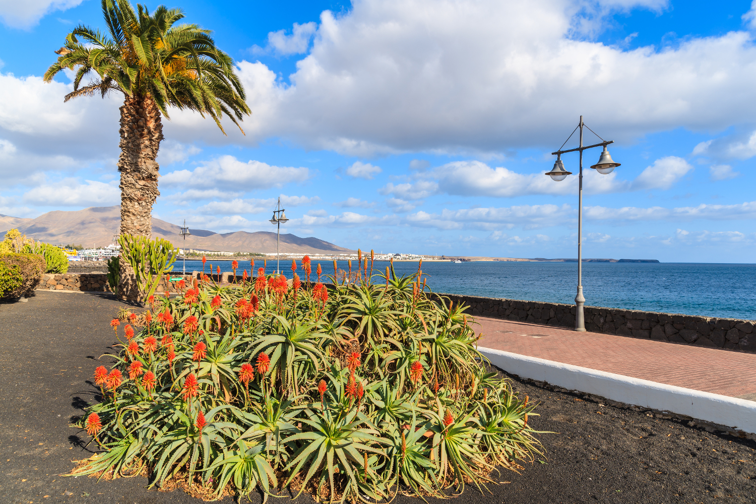 Tropical flowers in Playa Blanca, Lanzarote