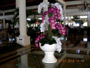 Lovely orchid arrangement in the Dominican Republic