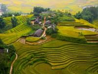 Rice terraces - Sapa, Vietnam