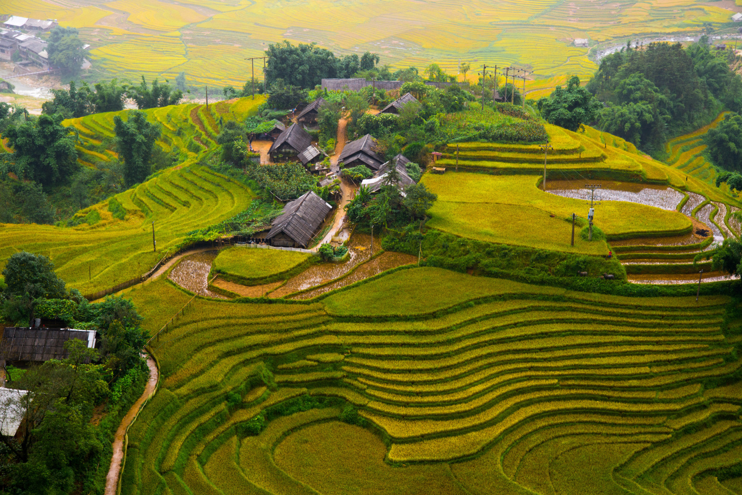 Rice terraces - Sapa, Vietnam