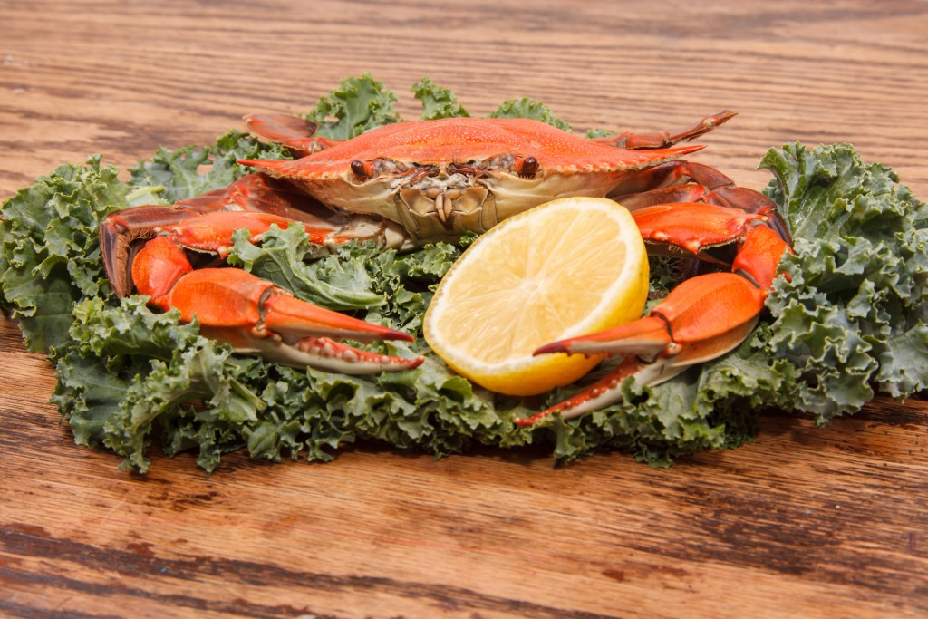 Steamed Blue Crab, one of the symbols of Maryland State and Ocean City, MD with lemon slice and garnished with kale on a wooden table