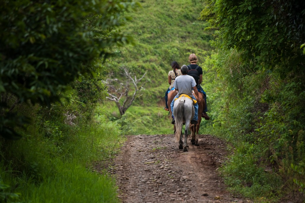 Tourists on horseback in Costa Rican cloud forest