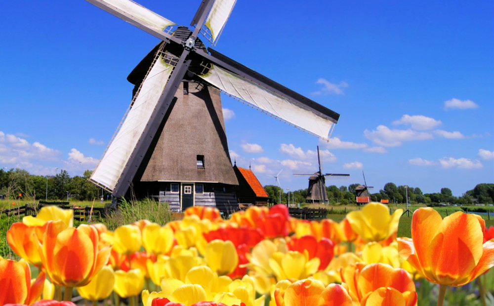 The Netherlands - Traditional Dutch windmills with tulips