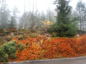 Oslo - autumn