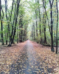 Baneasa Forest, Buchares,t Romania - autumn colours