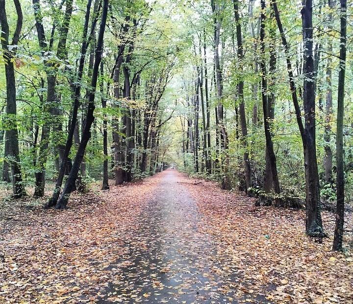 Baneasa Forest, Buchares,t Romania - autumn colours