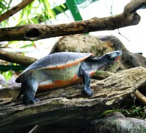 Aqua Terra Zoo in Vienna - Haus des Meeres - turtle