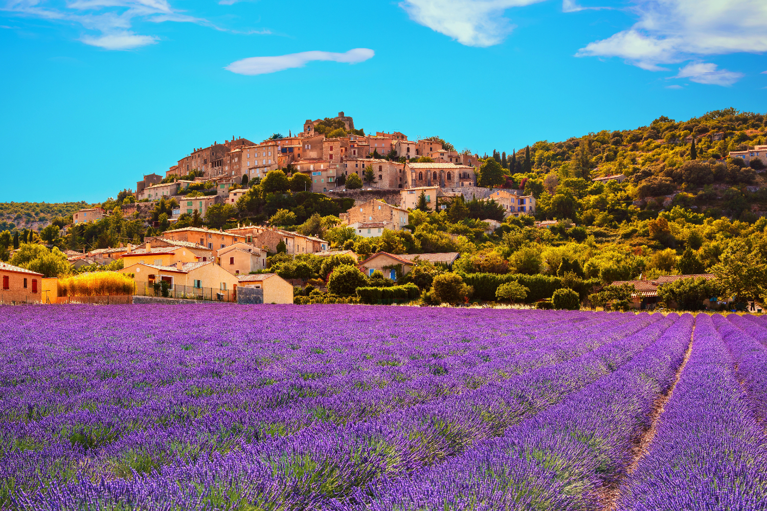 Simiane la Rotonde village and lavender. Provence, #France, #travel #best #photos and #places