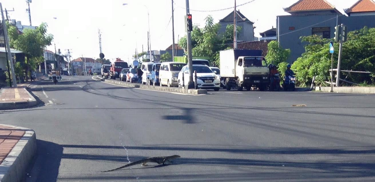 Indonesia - lizard crossing
