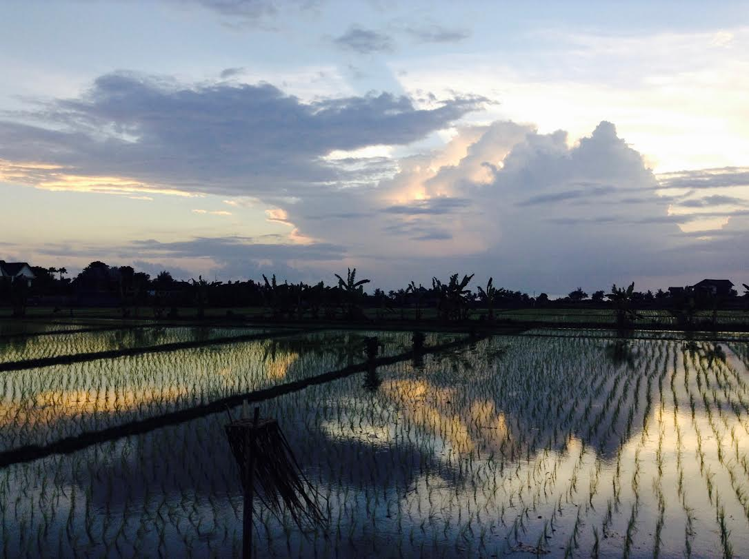 Indonesia - rice fields