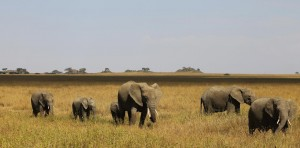 Tanzania - Top Destinations to visit in 2017 recommended by #travel bloggers