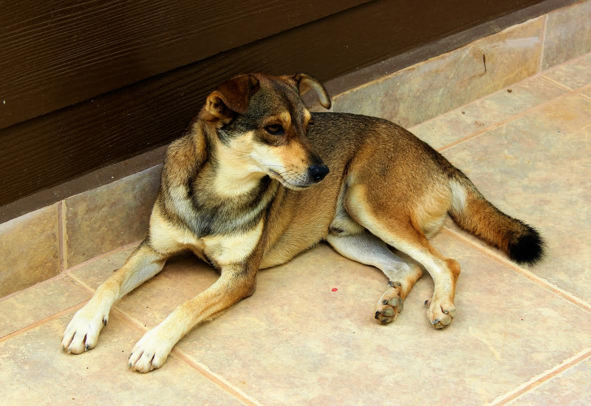 Zorro was a stray dog who adopted us, but has now found a permanent, happy home elsewhere.