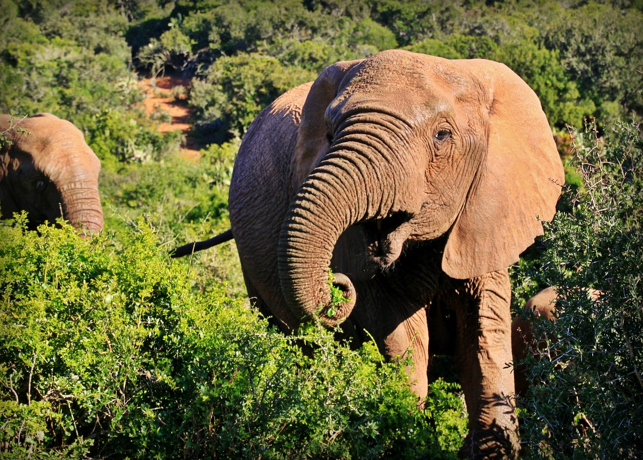Kruger National Park - elephant pixabay
