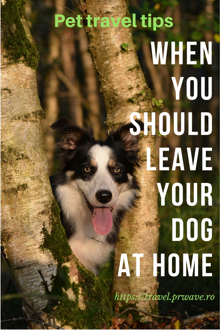 Pet travel tips: when you should leave your dog at home