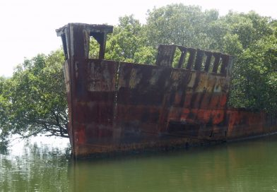 Quirky Attractions: Sydney's Shipwrecked Floating Forests