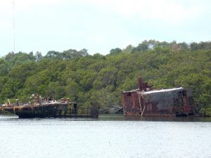 Sydney's Shipwrecked Floating Forests