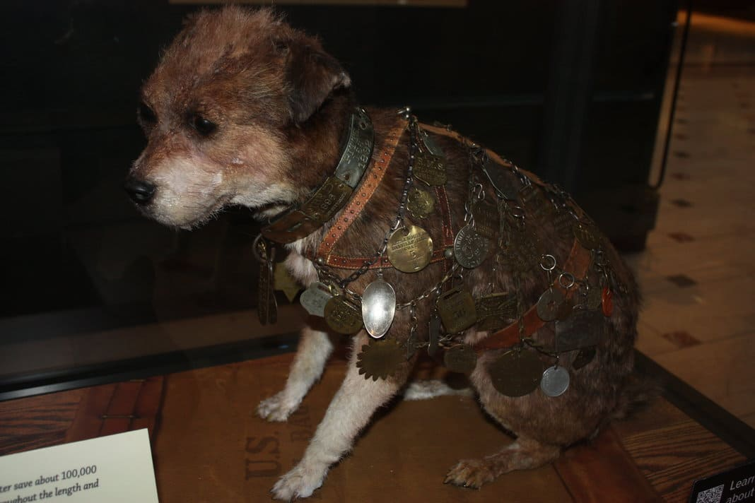 Owney the dog at the Postal Museum