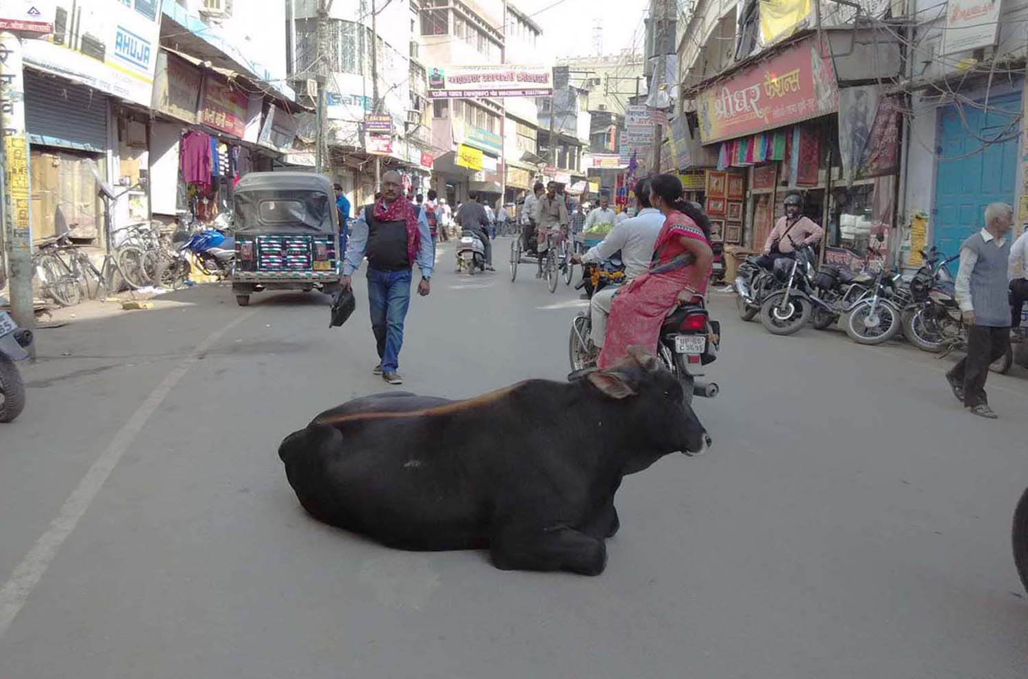 Bull on the road in Varanasi, India