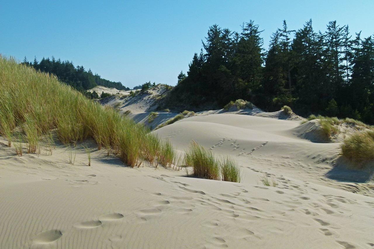 Sand Dunes - Oregon