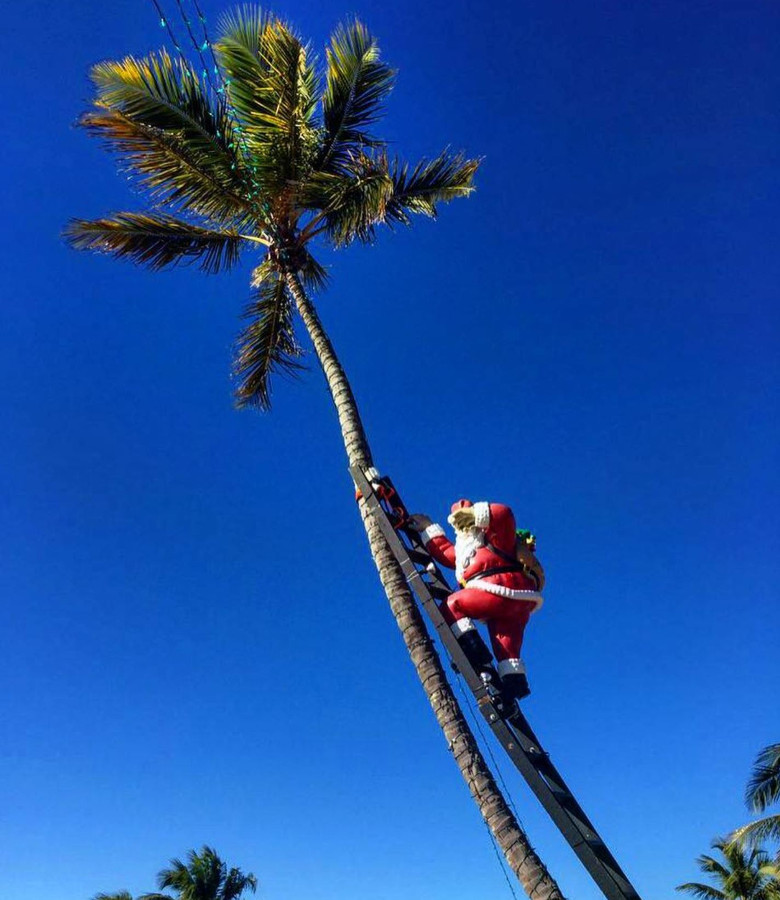 Santa on a palm tree in Florida, USA is one of the alternative Christmas holiday ideas. Read the article to discover more unique ways to spend Christmas. #christmas #christmasdestinations #christmasholidays #christmastrips #uniquechristmas #unusualchristmas #alternativechristmas