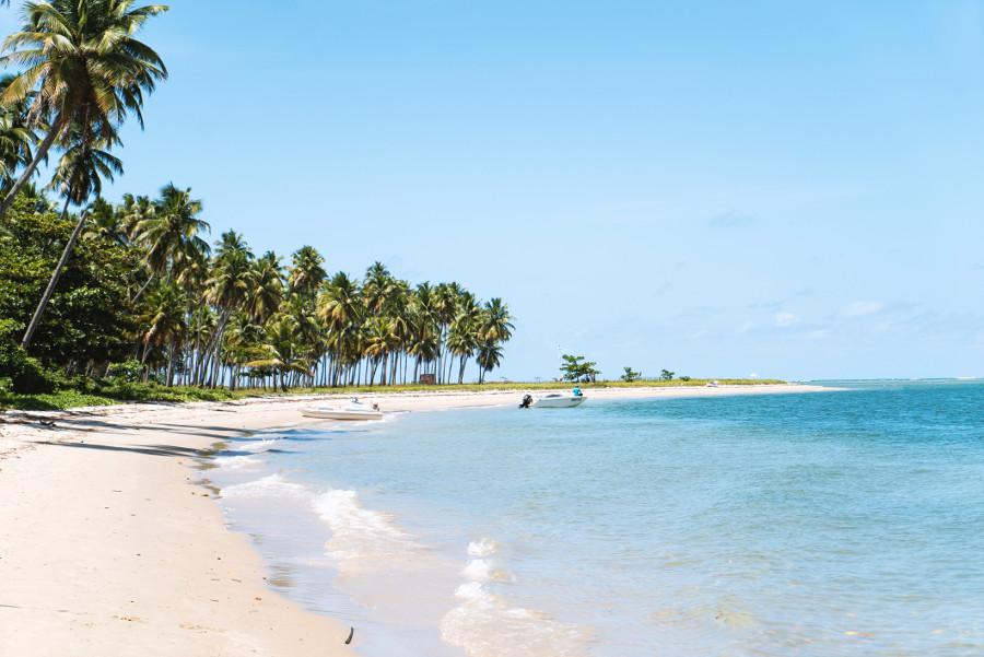 vacation palms