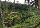 2 Days in Ubud, Bali, Indonesia