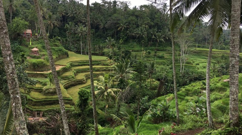 The famous Tegalalang rice terraces in Ubud are simply stunning. Discover the top places to visit in ubud from this 2 days in Ubud itinerary. #ubuditinerary #ubudguide #baliindonesia #balitravel #bali #baliholiday #balinese #ubud