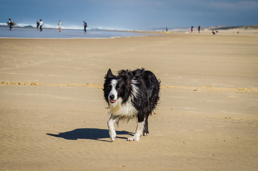 Traveling with a Pet? Here are 4 Useful Tips