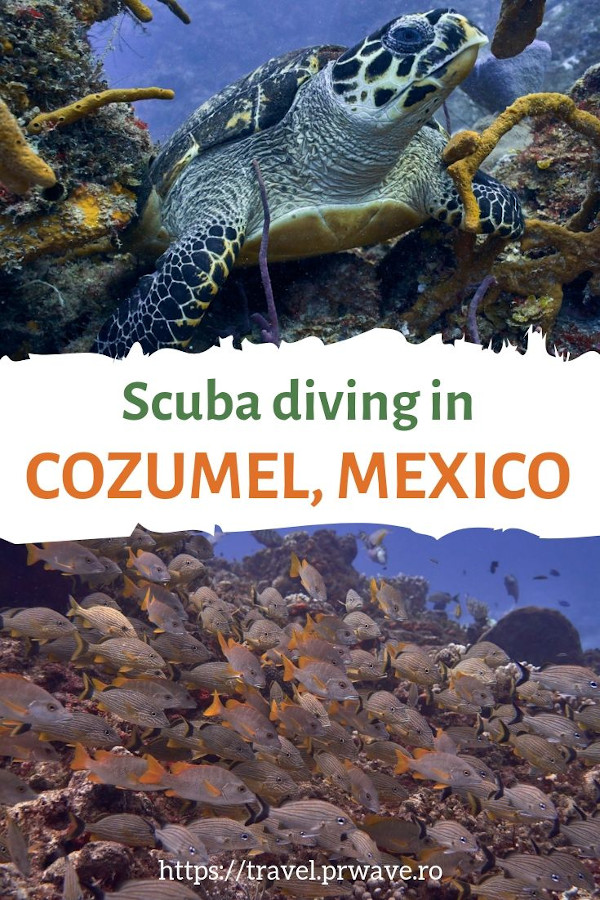 Scuba diving in Cozumel, Mexico - the ultimate Cozumel diving guide #cozumel #scubadiving #mexico
