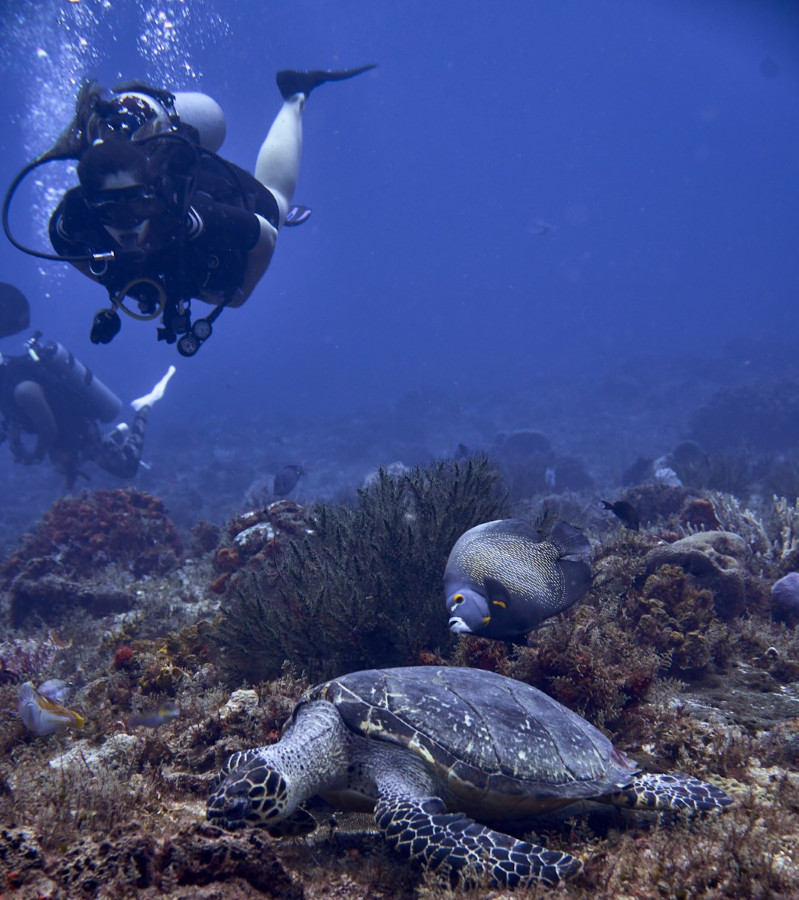 Your complete guide to scuba diving in Cozumel, Mexico