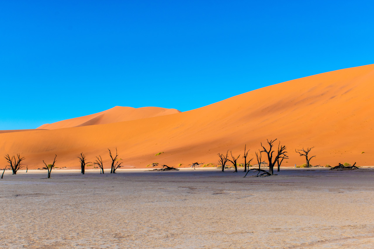Deadvlei trees, Namibia. This is your Namibia things to do list - the best places to visit in Namibia