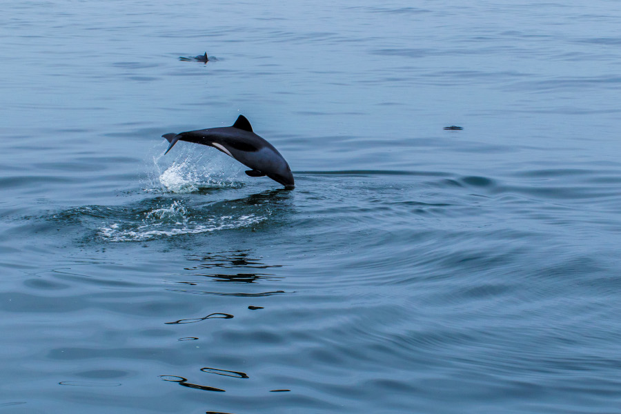 Dolphins in Walvis Bay, Namibia. Plan the perfect trip to Namibia with this guide to the best places to visit in Namibia.
