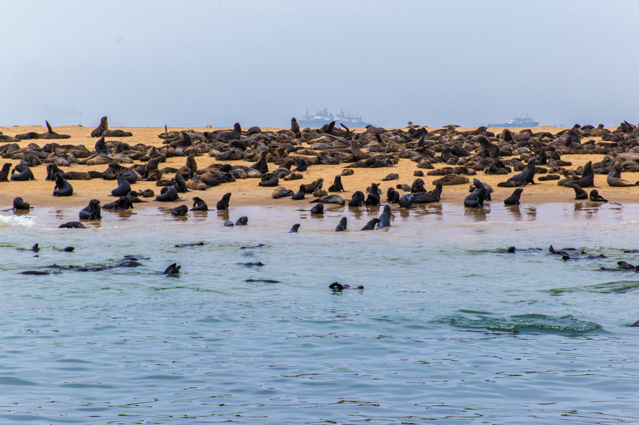 Seal colonies in Walvis Bay, Namibia. Discover the best things to do in Namibia - your Namibia bucket list - from this article. Plan your Namibia itinerary using these recommendations on the best places to visit in Namibia